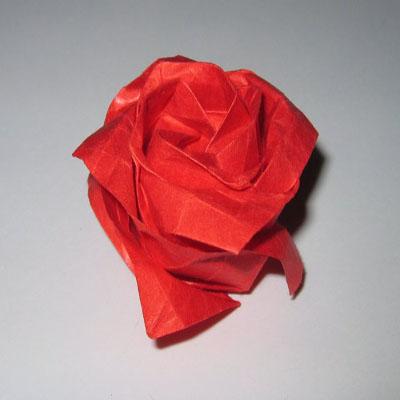 Роза Kawasaki