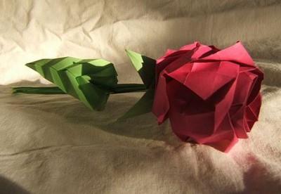 роза кавасаки