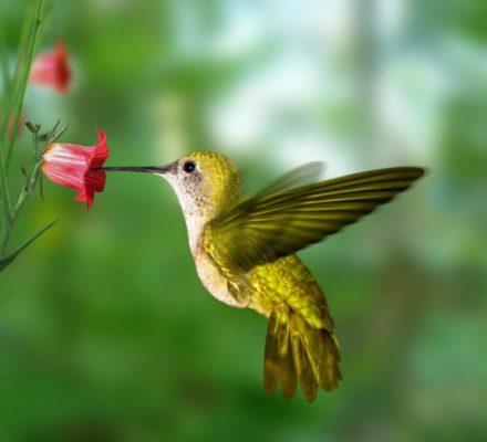 Оригами птичка Хамминг Колибри